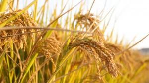 Doomsday Survival - Food Shortages